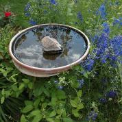 agua en plato con plantas