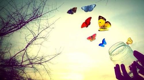 mariposas fuera de frasco